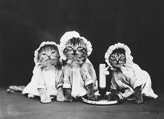 Ретрокотофото. Какими были котики 100 лет назад — Живой Журнал
