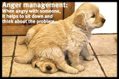 Dog Humor...Love this picture of puppies... :)