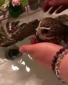 Funny Animal Videos, Funny Animal Pictures, Animal Memes, Funny Videos, Cute Little Animals, Cute Funny Animals, Funny Owls, Beautiful Birds, Animals Beautiful