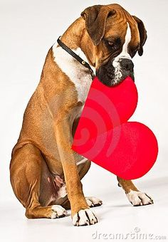 Boxers are the best dogs, ever. (click here) http://dunway.us/kindle/html/boxer.html