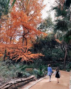 Fun Outdoor Things to do with Kids in Austin, Texas - Zilker Botanical Garden