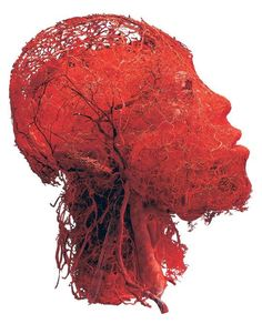 Veins and vessels of the head : interestingasfuck
