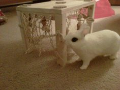 Activity Zone Rabbit Toy - Original - Natural : Pet Rabbit Toys, Homemade Toys for Rabbits