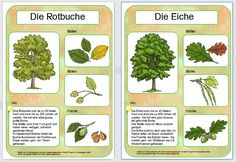 Hallo allerseits, auf Elkes Anregung hin, habe ich mich heute mal an den ersten … Hello everyone, on Elke's suggestion, I've tried today on the first two tree posters. Primary Education, Primary School, Thing 1, School Hacks, Science, Kids Learning, First Time, Teaching, Popular Bags