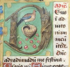 Initial D enclosing peacock at beginning of None in Hours of the Virgin | Book of Hours | Netherlands, ca. 1520 | The Morgan Library & Museum