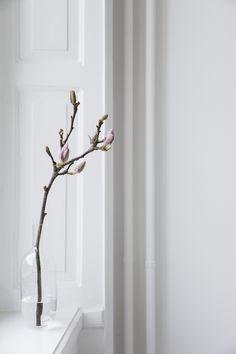Magnolia stem in a bud vase | Easter decor