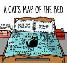 Funny cat map of the bed for cat lovers and owners. Amazing detail of how cats perceive us as they own pet and think they own us. Cute Funny Animals, Funny Animal Pictures, Funny Cute, Cute Kittens, Cats And Kittens, Funny Kitties, Big Cats, Silly Cats, Siamese Cats