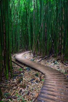Follow the path - Bamboo Forest, Maui, Hawaii...this was a great hike that ended at a beautiful waterfall.