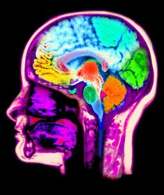 Image result for cross section of head with brain