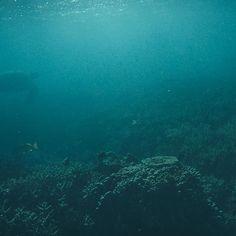 #wilsonisland #wilsonislandreef #heronisland #greatbarrierreef #australia #queensland #traveltheworld #travelphotography #travelstoke @wilsonisland #turtle #greenturtle by schnslnd http://ift.tt/1UokkV2