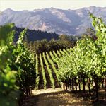 2,100 feet high on the ridge of Mayacamas Mountains, the Pride Vineyards straddles both Napa and Sonoma counties. - See more at: http://travelcuriousoften.com/february12-curious-thirsty.php#sthash.F6unX4t9.dpuf