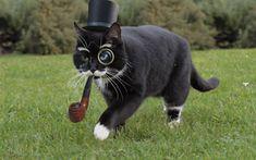 gentleman cat