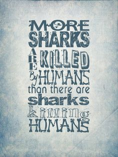 #sharks-actually humans kill over 100 million sharks a year, and guess how many people are killed by sharks each year.... Less than 10! Depressing, long live sharks!!!