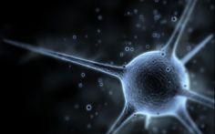 La patología vascular y degenerativa en una serie de casos de demencia avanzada