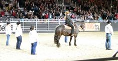 Clydesdale Horse Line Dances In Sweet Video - InspireMore
