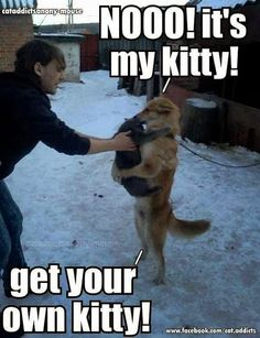 - Funny Animal Quotes - - Fun Claw Funny Cats Funny Dogs Funny Animals: Funny Animals 20 Pics The post Nooo! appeared first on Gag Dad. Funny Animal Quotes, Animal Jokes, Cute Funny Animals, Funny Animal Pictures, Cute Baby Animals, Funny Cute, Funniest Animals, Animal Captions, Funny Photos