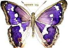 ACEO ORIGINAL WATERCOLOR BUTTERFLY [Purple Emperor]