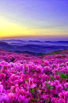 Lindo amanecer y flores rosadas | Beautiful sunrise and pink flowers - #paisajes #landscapes #scenery #naturaleza #nature