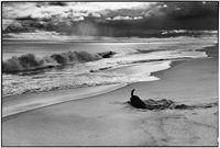 Elliott Erwitt - Outstanding Contribution to Photography