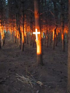 Cross in my pine tree forest at sunset