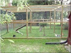 SafeCat DIY catio customer result: Outside space for cats. So fun! Cat Run, Outdoor Cat Enclosure, Cat Playground, Outdoor Cats, Space Cat, Catio, Crazy Cats, Cats And Kittens, Kitty Cats
