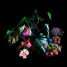 "davidworthingtonphoto: "" Still Life: Monstera, Balloons, Birthday Flowers "" Botanical Drawings, Make Your Mark, Birthday Balloons, Still Life, Floral Arrangements, Illustrators, Eye Candy, Things To Come, Flowers"