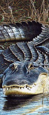 Gator - American Alligator. Edward Spera Gallery