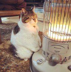 """""""I like it"""": comments: 290 - musetti ( on . - """"I like it"""": comments: 290 – musetti ( on Instagra … – Animals - Cute Funny Animals, Cute Cats, Funny Cats, I Love Cats, Crazy Cats, Kittens Cutest, Cats And Kittens, Kitty Cats, Animals And Pets"""