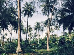 You Can't Koh Rong: 3 Days in Paradise Travel Tips, Paradise, Adventure, Day, Plants, Photography, Flora, Fairy Tales, Plant