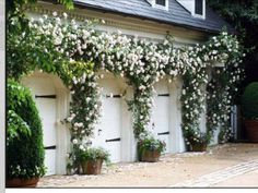 What roses trimmed close to wall might look like around garage door