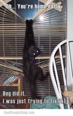 Vertical blinds are better ... not for cats | Cool People Shop