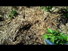 ▶ No-till Gardening with Mulch (1) - YouTube