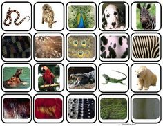 """""""Animal Body Coverings"""" Match & Sort for Autism by Inspired by Evan Autism Resources Primary Science, Kindergarten Science, Teaching Science, Science Activities, Montessori Science, Animal Coverings, Zoo Art, Autism Resources, Montessori Materials"""
