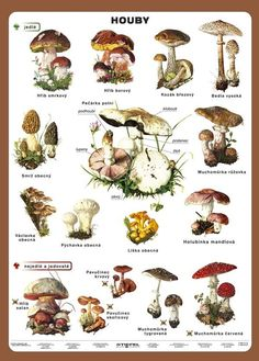 Související obrázek Wild Mushrooms, Stuffed Mushrooms, Poland Culture, Polish Language, Autumn Activities, English Class, Edible Flowers, Kids Education, Flower Art