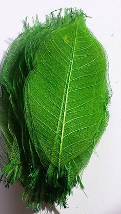 Folhas Esqueleto - Verde ***Disponível para Venda
