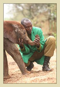 Sheldrick Trust Orphan's Project. For the person in your life who already has everything: sponsor a baby rhino or elephant!!