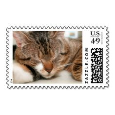 SLEEPING BROWN TABBY 1ST CLASS STAMPS