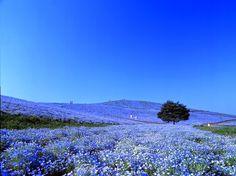 HOME & GARDEN: Le Parc Hitachi Seaside au Japon