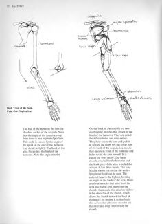 #ClippedOnIssuu from Anatomy a complete guide for artists joseph sheppard