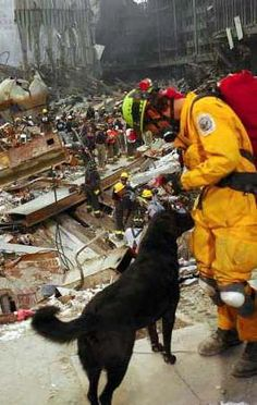 Great collection of photos of canine rescue dogs from 9/11