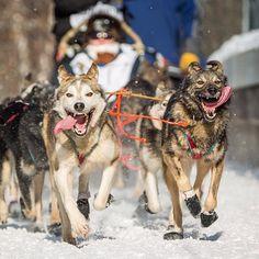 Anchorage, Alaska, kicks off the Iditarod Trail Sled Dog Race