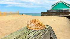 23 Outer Banks Beach Finds Ideas Outer Banks Beach Outer Banks Beach