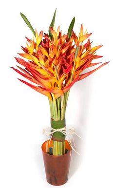 fleur oiseau de paradis bouquet - Recherche Google