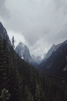 #nature #forest #mountains