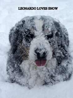 Can't tell how big Leonardo is or how much snow there is, but I sure hope he gets in soon!