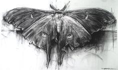 April Coppini - Luna Moth // aprilcoppini.com