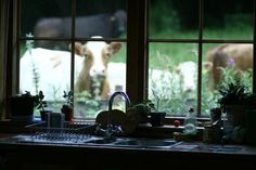 i need bigger windows. and a cow.