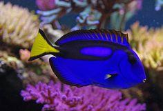 Ellen DeGeneres Hints At Anti-SeaWorld Message In 'Finding Nemo' Sequel