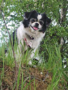 Untitled Husky, Dogs, Animals, Animales, Animaux, Doggies, Animal, Animais, Husky Dog