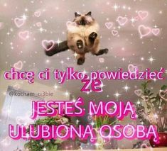Wholesome Memes, Dog Love, Bff, Dog Cat, Funny, Cute, Maine, Kawaii, Ha Ha